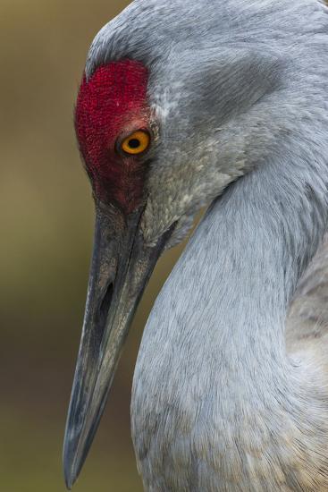 Bird-Art Wolfe-Photographic Print