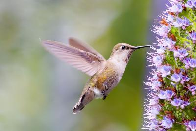 Bird-Mythungoc Photography-Photographic Print