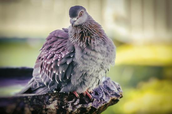 Bird-Pixie Pics-Photographic Print