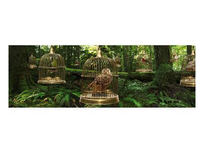 Birdcage Forest-Richard Desmarais-Art Print