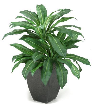 Birdnest Palm Planter