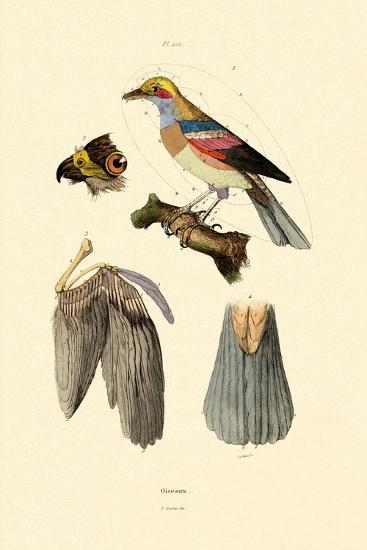 Birds, 1833-39--Giclee Print