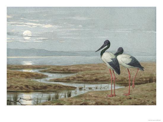 Birds Against a Stark Moonlit Landscape, c.1870-90-Henry Stacey Marks-Giclee Print