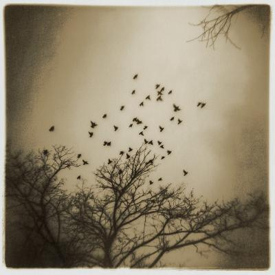 Birds and Trees, Discovery Park-Kevin Cruff-Photographic Print