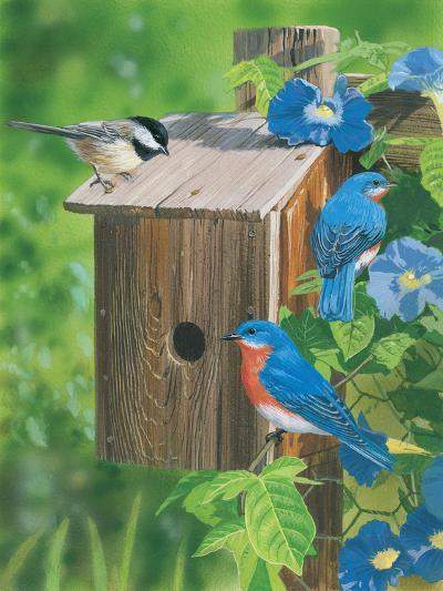 Birds at the Feeder (Bluebirds)-William Vanderdasson-Giclee Print