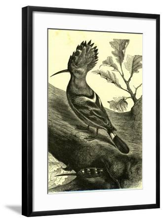 Birds Austria 1891--Framed Giclee Print