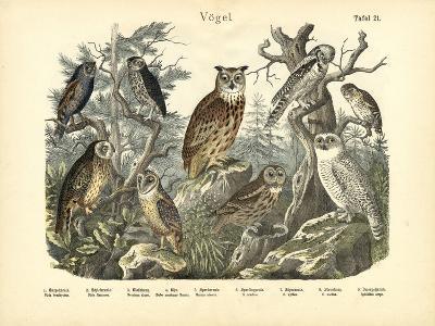 Birds, C.1860--Giclee Print