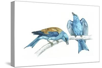 Birds: Coraciiformes, European Rollers (Coracias Garrulus), Courtship