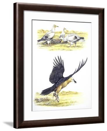 Birds: Falconiformes, Egyptian Vulture (Neophron Percnopterus) Surrounding Animal Skeleton--Framed Giclee Print