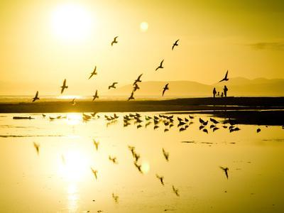 https://imgc.artprintimages.com/img/print/birds-fly-as-the-sun-begins-to-set-along-the-california-coast_u-l-q1bbq8r0.jpg?p=0