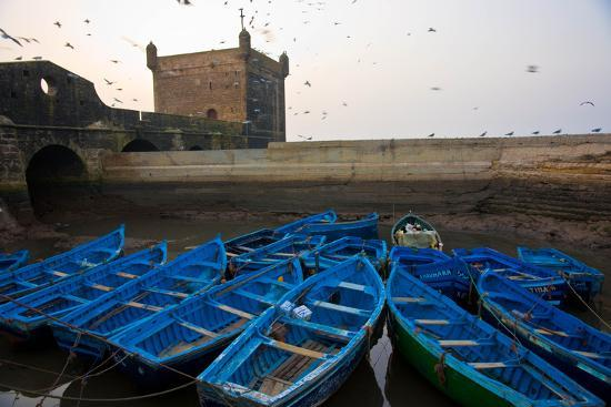Birds Fly Over the Traditional Blue Boats of Essaouira Harbor-Cristina Mittermeier-Photographic Print