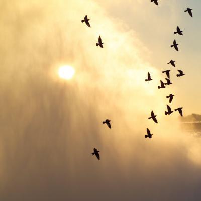 Birds Flying Above Niagara Falls, Ontario, Canada-Keith Levit-Photographic Print
