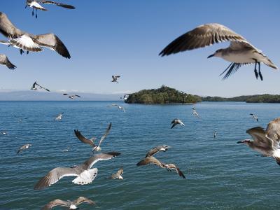 Birds Flying Along Ferry Ride Between Peninsula De Nicoya and Puntarenas.-Christian Aslund-Photographic Print