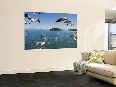 Birds Flying Along Ferry Ride Between Peninsula De Nicoya and Puntarenas.-Christian Aslund-Wall Mural