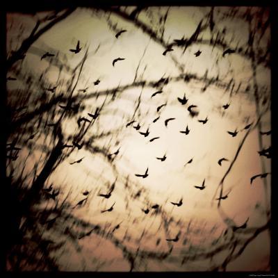 Birds Flying from Tree-Ewa Zauscinska-Photographic Print
