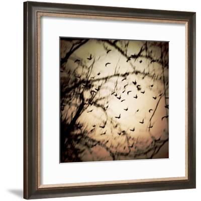 Birds Flying from Tree-Ewa Zauscinska-Framed Photographic Print
