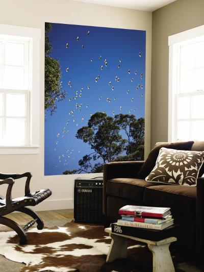 Birds Flying Overhead-John Sones-Wall Mural