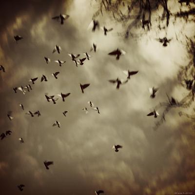Birds Flying overhead-Ewa Zauscinska-Photographic Print