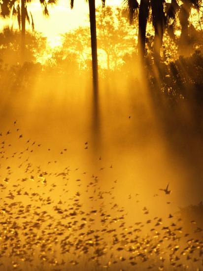 Birds Flying up into Sunlight Streaming Through the Jungle Foliage-Beverly Joubert-Photographic Print