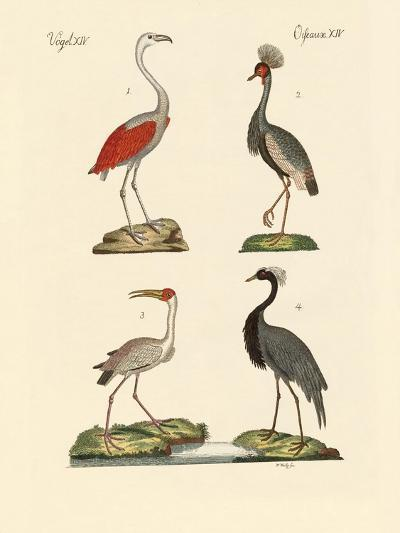 Birds from Hot Countries--Giclee Print