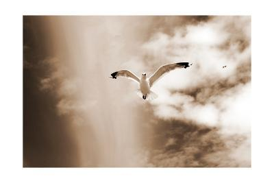Birds From The Dunes-Alaya Gadeh-Art Print