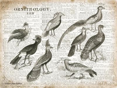 Birds I-Gwendolyn Babbitt-Art Print