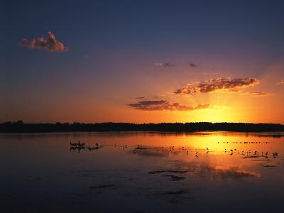 Birds in Water at Sunset, J.N. Ding Darling National Wildlife Refuge, Florida, USA-Adam Jones-Photographic Print