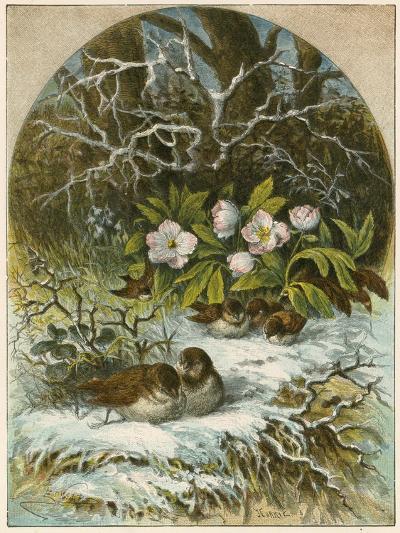 Birds in Winter-English School-Giclee Print
