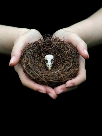 Birds Nest in Cupped Hands-Elisa Lazo De Valdez-Photographic Print