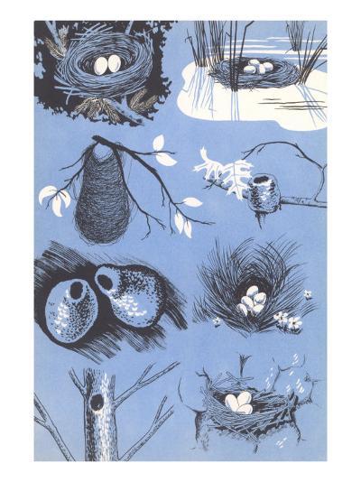 Birds' Nests--Art Print