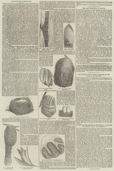 Birds' Nests--Giclee Print