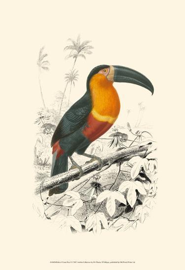 Birds of Costa Rica I-M^ Charles D'Orbigny-Art Print