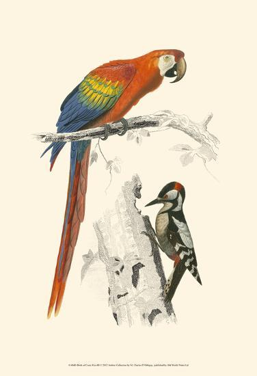 Birds of Costa Rica III-M^ Charles D'Orbigny-Art Print