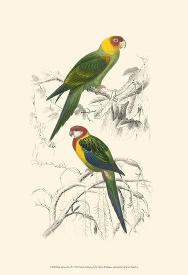 Birds of Costa Rica IV-M^ Charles D'Orbigny-Art Print
