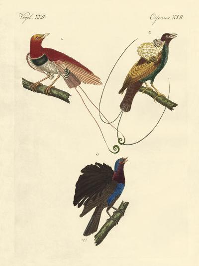 Birds of Paradise--Giclee Print