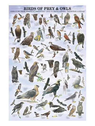 Birds of Prey and Owls--Art Print