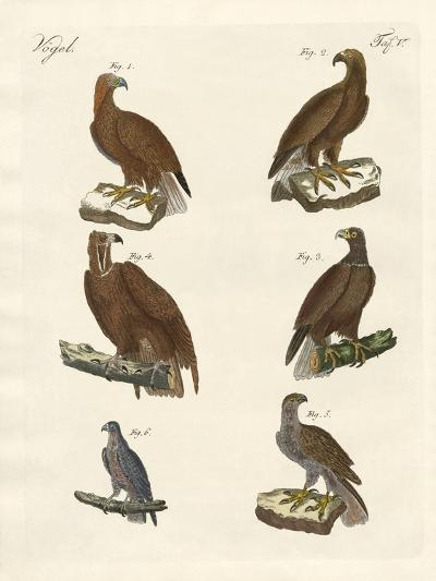 Birds of Prey--Giclee Print