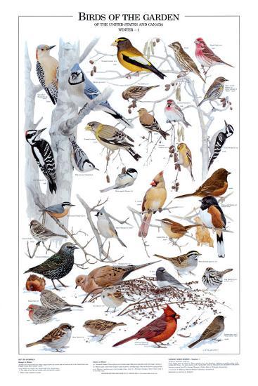 Birds of the Garden Winter I--Art Print