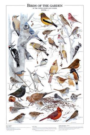 Birds of the Garden Winter I