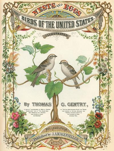 Birds of the US, Eggs and Nests--Art Print