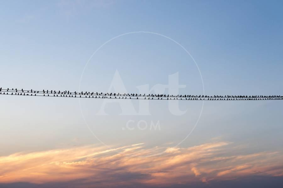 Birds On A Wire In Kent, England Photographic Print by Alex Treadway ...