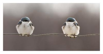 Birds On A Wire Giclee Print By Lucie Gagnon Artcom