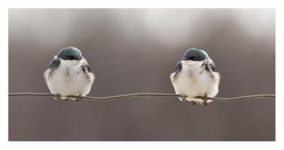 https://imgc.artprintimages.com/img/print/birds-on-a-wire_u-l-f8wjzl0.jpg?p=0