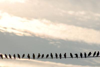 Birds on a Wire-Jessica Kiser-Photographic Print