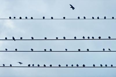 https://imgc.artprintimages.com/img/print/birds-on-a-wire_u-l-q10cyuh0.jpg?p=0