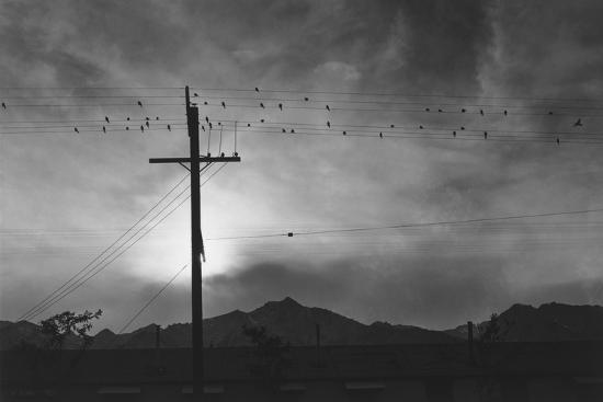 Birds on Wire, Evening, Manzanar Relocation Center', 1943 by Ansel Adams--Photo