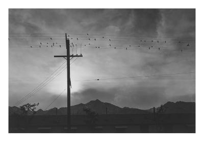 Birds on Wire, Evening-Ansel Adams-Art Print