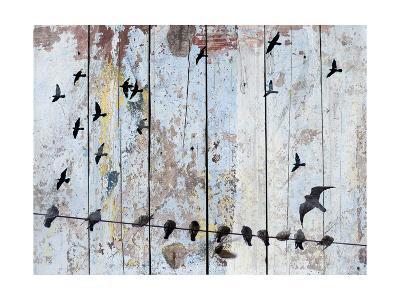 Birds on Wood III-Irena Orlov-Art Print