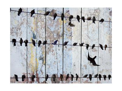 Birds on Wood IV-Irena Orlov-Art Print