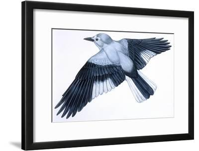 Birds: Passeriformes, Clark's Nutcracker (Nucifraga Columbiana)